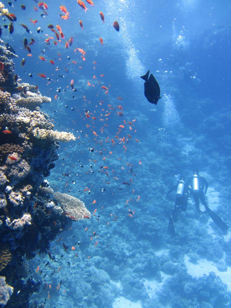 fonds marins et plongeurs