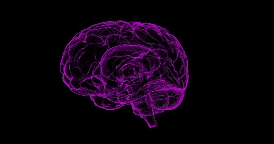 Et si nous apprenions à notre cerveau à sauver la planète?